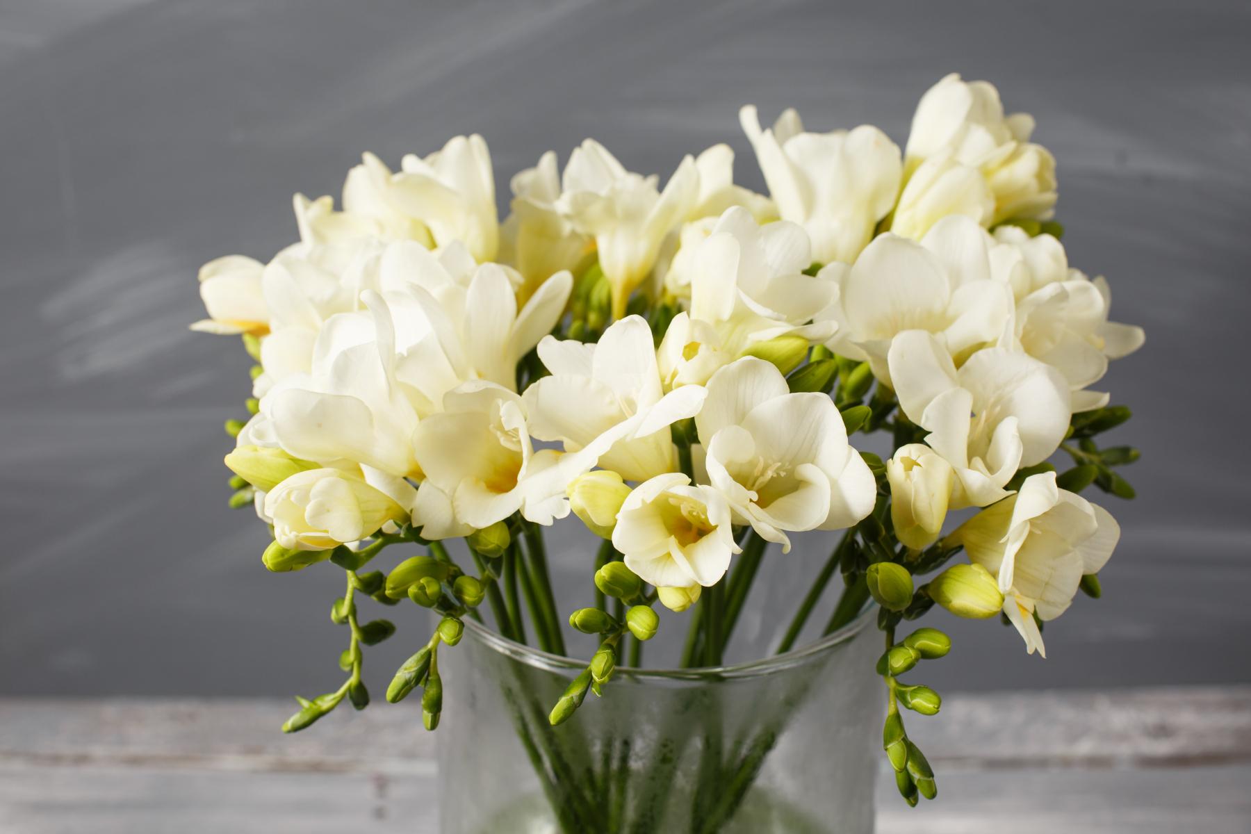 Hvitgule blomster på grønn stilk i vase