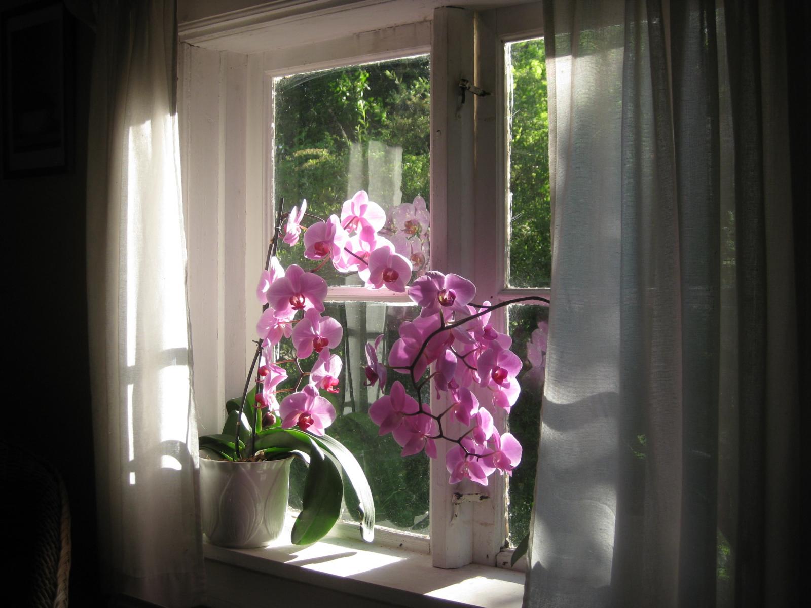 Lyserosa og mørkerosa blomster på stengel