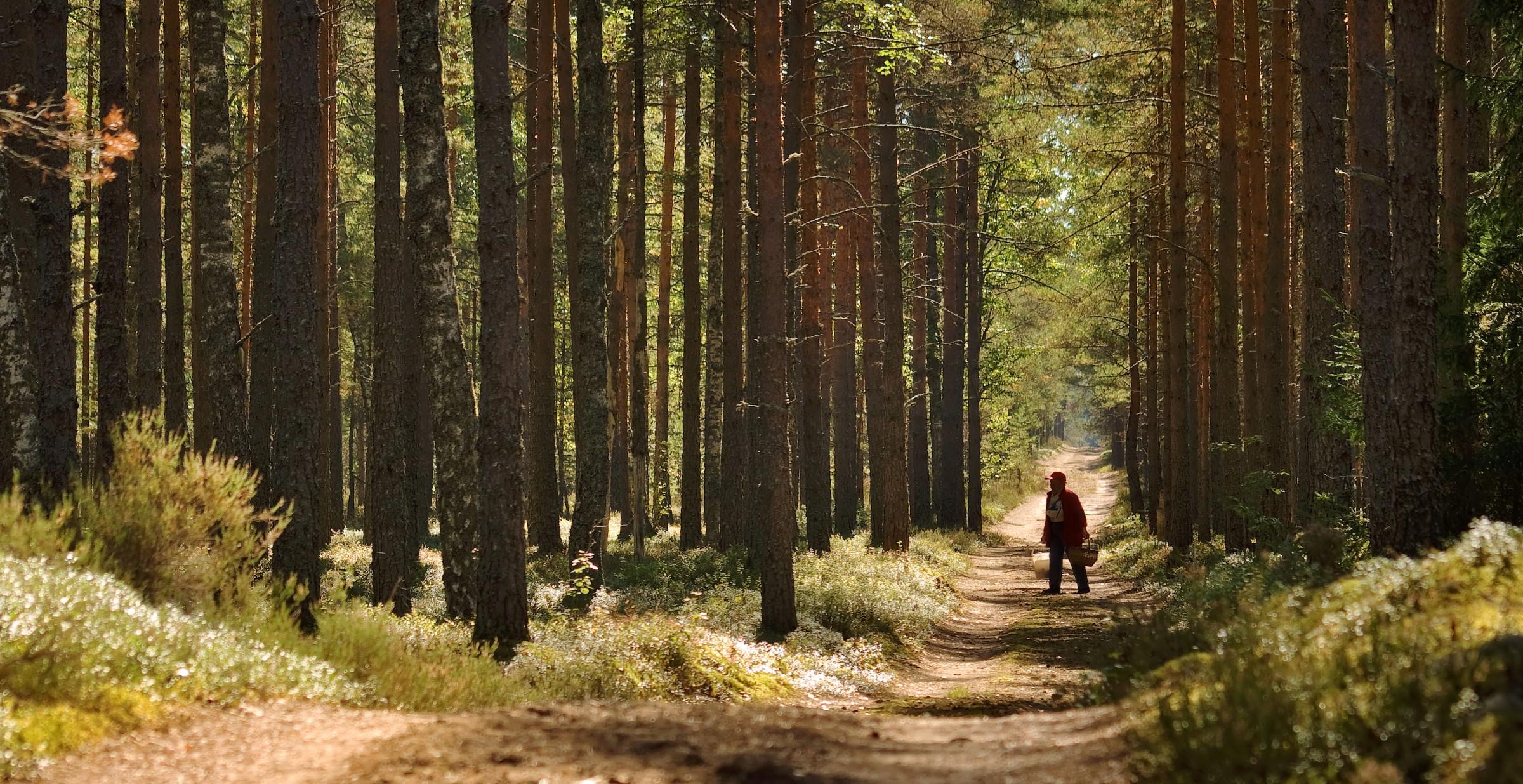 Person går i skogen.