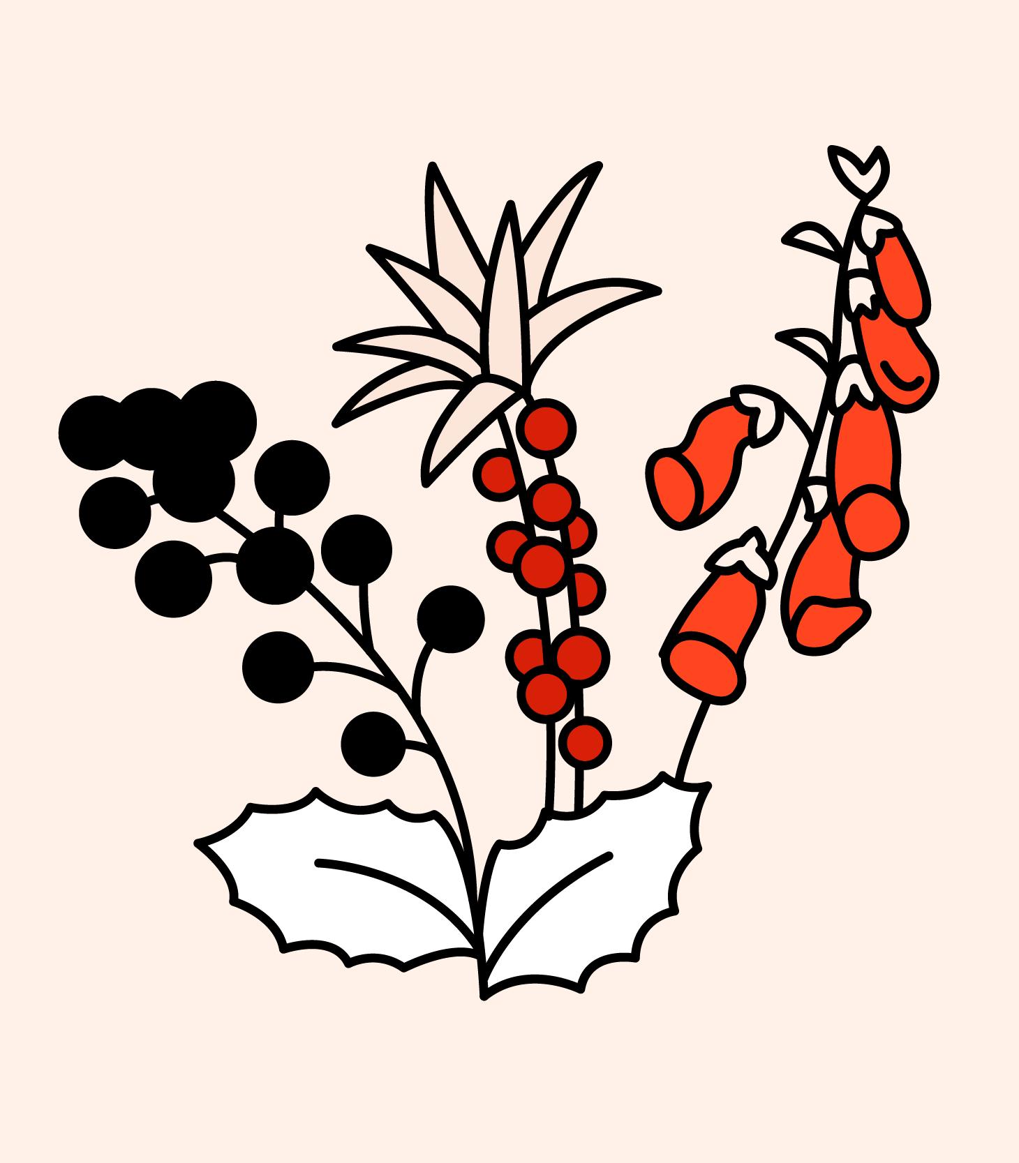 Illustrasjonsbilde av ulike planter og bær